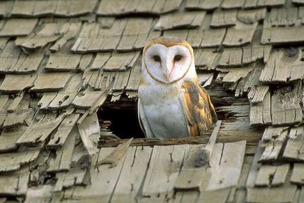 Где живут совы - в дупле или гнезде