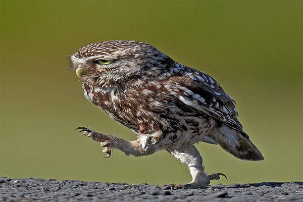 Как назвать сову - варианты имён для сыча