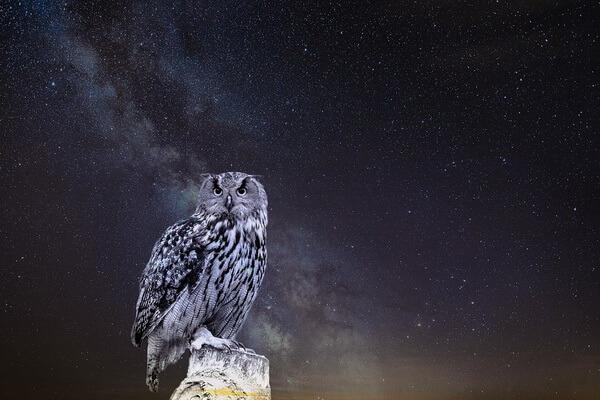 Увидеть сову ночью - значение приметы
