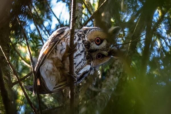 Увидеть сову днём - значение приметы
