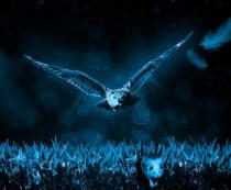 Приметы о сове