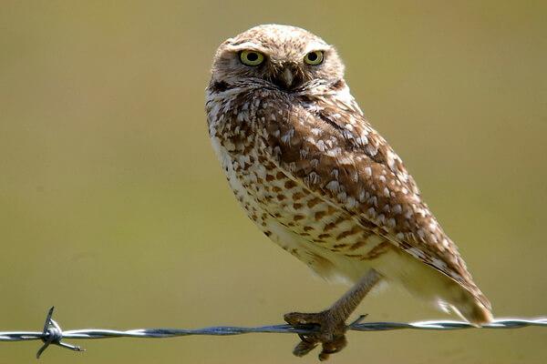 Чем отличается сыч от совы - разница в особенностях рациона и охоты