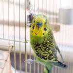 Витамины для попугаев волнистых