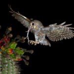 Самые маленькие совы