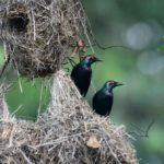 Гнездо скворца и многое другое