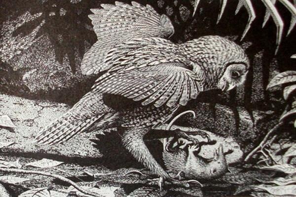 Орнимегалоникс - самая крупная сова из существовавших на планете, но вымерших