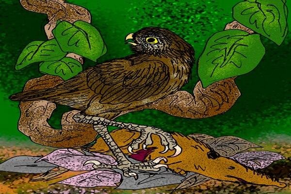 Гигантская кубинская сова - самая крупная сова из ранее существовавших на планете