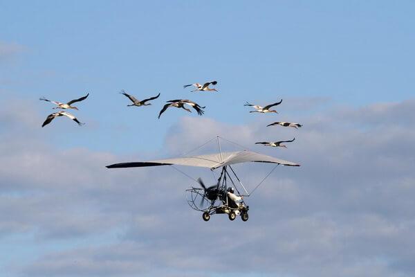 Полёт надежды - проект по сохранению популяции стерхов в России